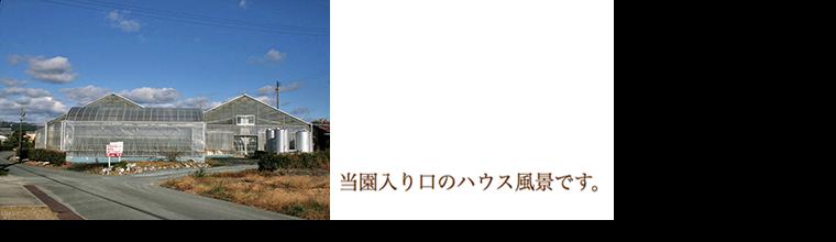 高山ローズ:当園入り口のハウス