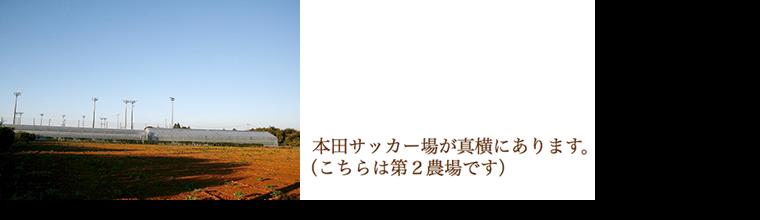 高山ローズ:第2農場
