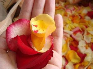 薔薇の花弁 (50輪使用)