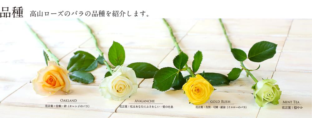 高山ローズ取扱いのバラ品種をご紹介します